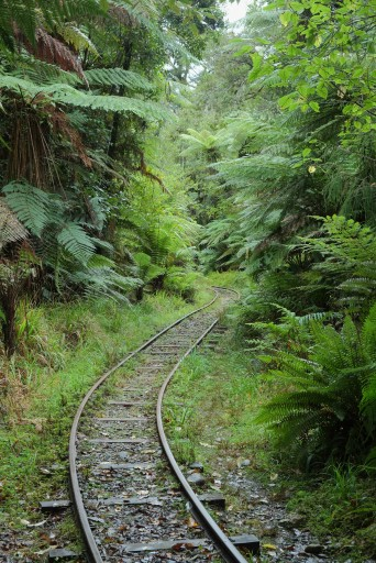 Charleston_Nile_River_Rainforest_Train_tracks